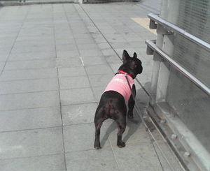0206�@昼散歩.jpg