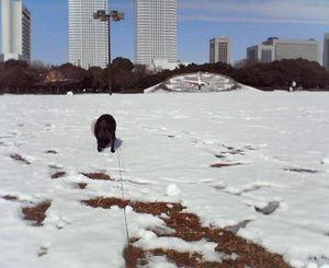 0215�A雪.jpg