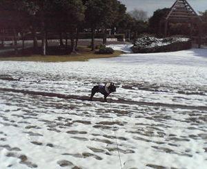 0215�F雪.jpg